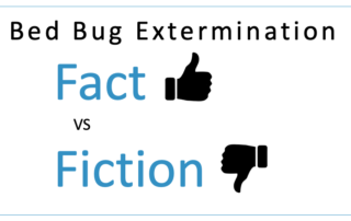 Non-Toxic Bed Bug Extermination