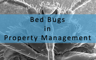 Bed Bugs in Property Management